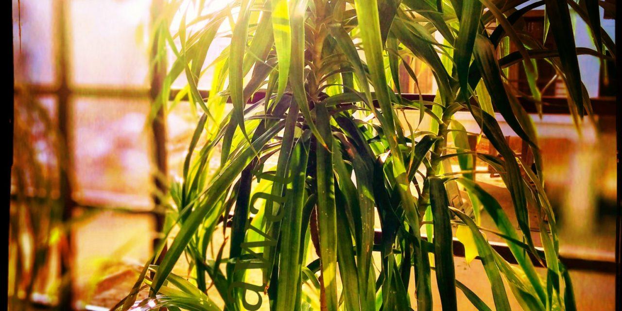 Plant picture mobile click